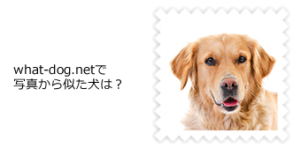 what-dog.netで写真から似た犬は?